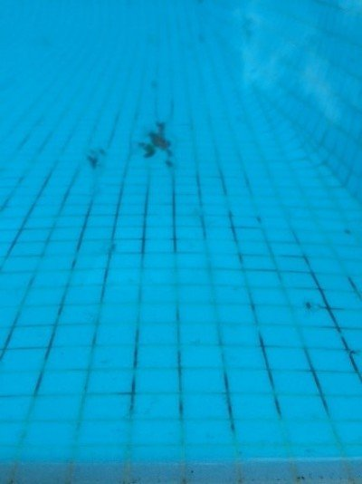 Black spot stains in swimming pools - Can ringworm spread in a swimming pool ...