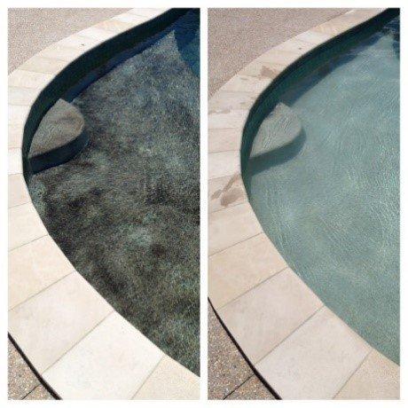Black Spot Algae In Pool