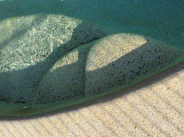 Black spot algae on pebble pool